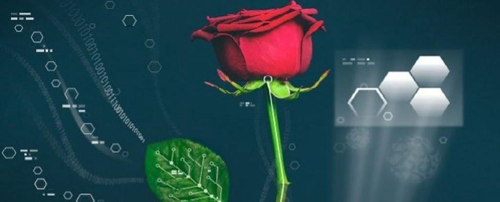 'साइबर गुलाब' को विकास