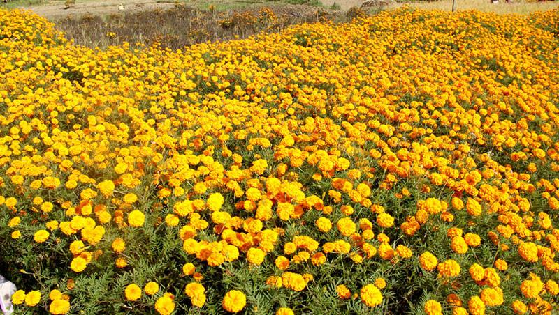 जनकपुरमा ५० लाखको फूलमालाको कारोबार