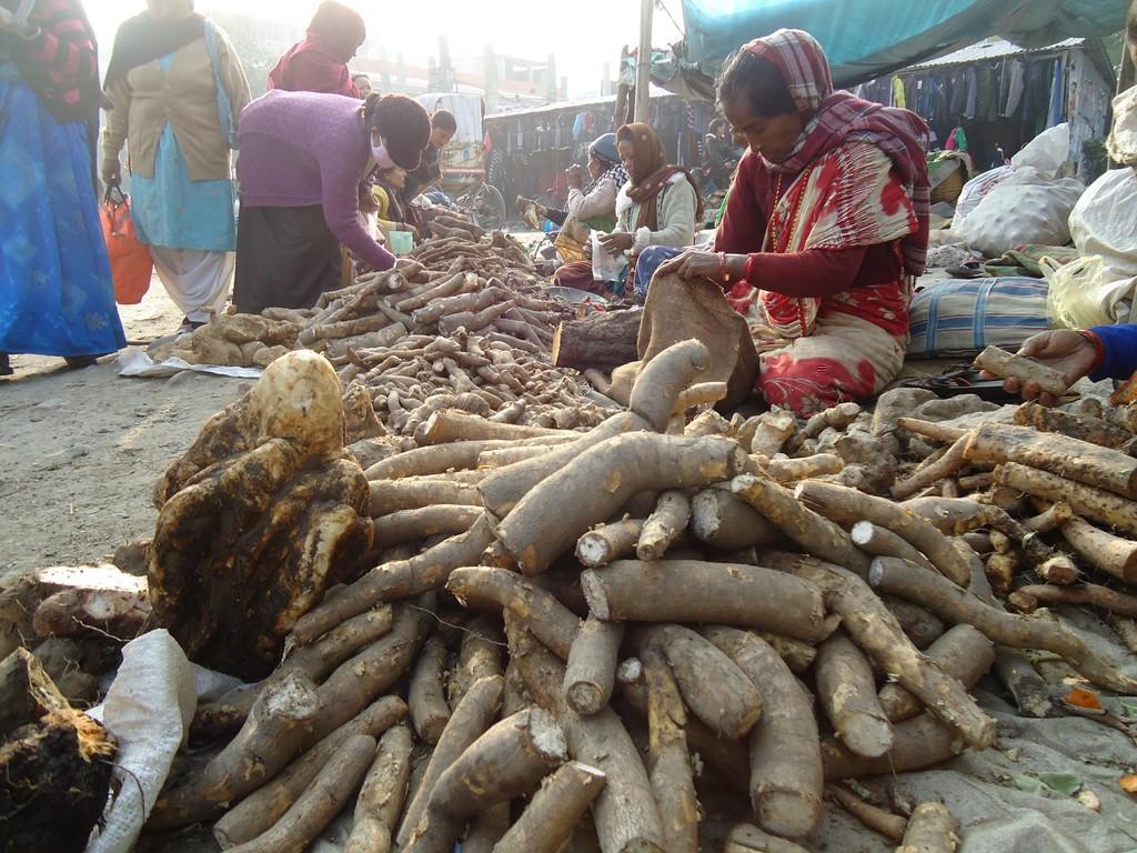 नेपाल तरुलमा पनि परनिर्भर, एक सातामा झण्डै २० करोडको तरुल बिक्री