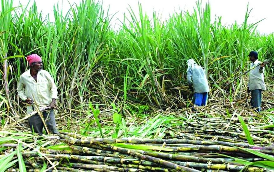 सरकारले तोकिएको मूल्य नपाएपछि उखु किसान आन्दोलित