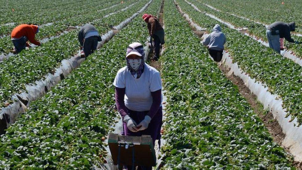 'जापानले नेपालबाट कृषि कामदार लैजाने'