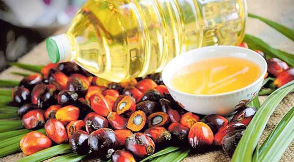 भारतमा पाम तेल प्रतिबन्धित!