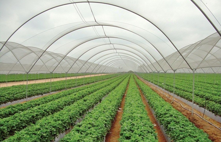 नीति तथा कार्यक्रम : १० वर्षमा कृषि उत्पादन दोब्बरले वृद्धि