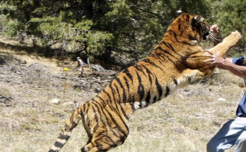 बाँके राष्ट्रिय निकुञ्जमा बाघको आक्रमणबाट एक भारतीय नागरिकको मृत्यु